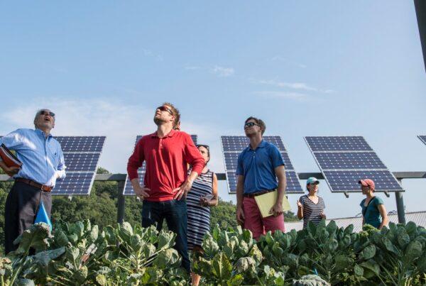 observando paineis solares - energia solar: a maior tendência na redução de custos e geração de energia limpa